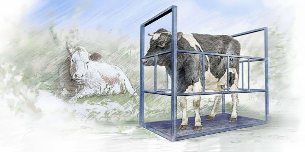 Напольные весы для животных